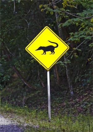 Signs from around the world