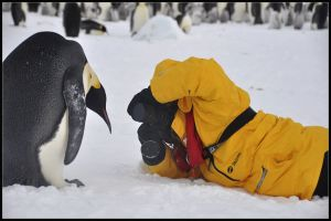 Gill and Emperor Penguin