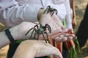 Skon village where tarantula spiders are a local delicacy
