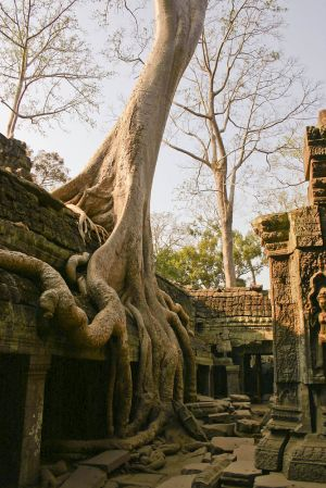 Ta Prohm - built around 1186 as a Buddhist Temple