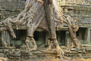 Tree roots engulfing Bayon Temple